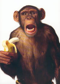 This is definitely not Zack Marcotte. As I was unable to find a photo of him, I instead chose a cute picture of a monkey with a yummy banana. I hope you don't mind.  Zack Marcotte is probably not a monkey.